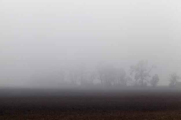 Am herbstmorgen wachsen am horizont bäume, die von dichtem nebel verdeckt werden