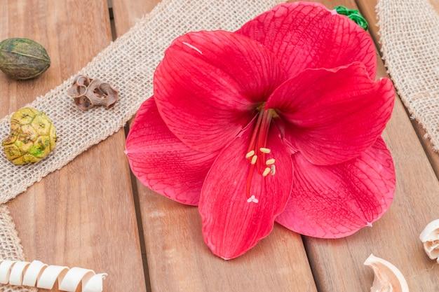 Amaryllis blume natürliche zusammensetzung