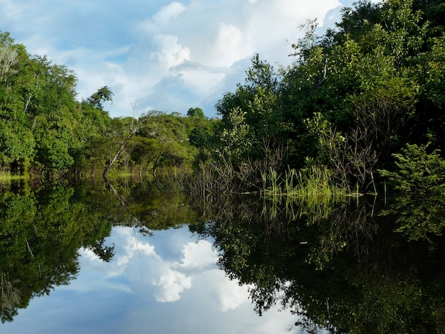 Amazonas im regenwald