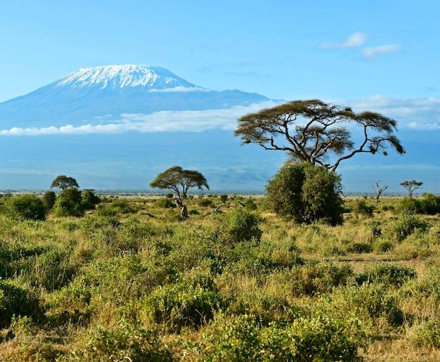 Amboseli national park und mount kilimanjaro in kenia
