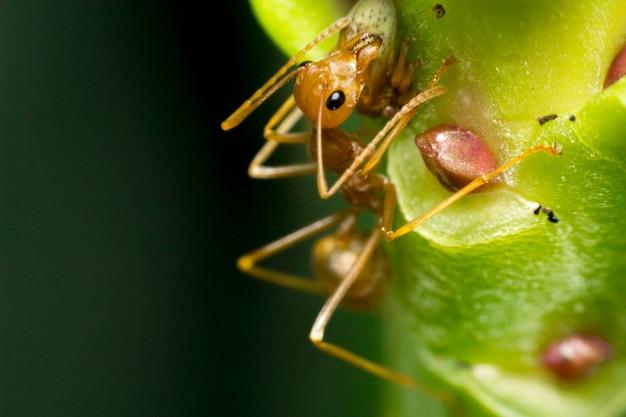 Ameisen hängen an grünen blättern