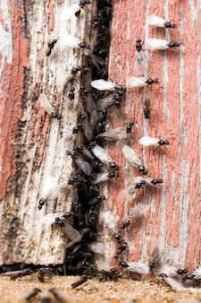 Ameisen kriechen auf dem gebäude