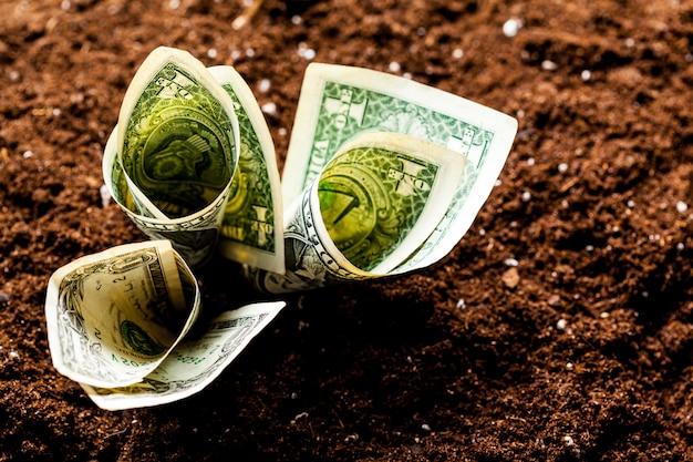 Amerikanische dollars wachsen aus dem boden