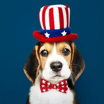 Amerikanischer beagle-welpe