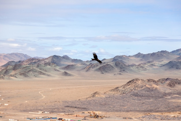 Amerikanischer brauner adler im flug über mongolischem berg