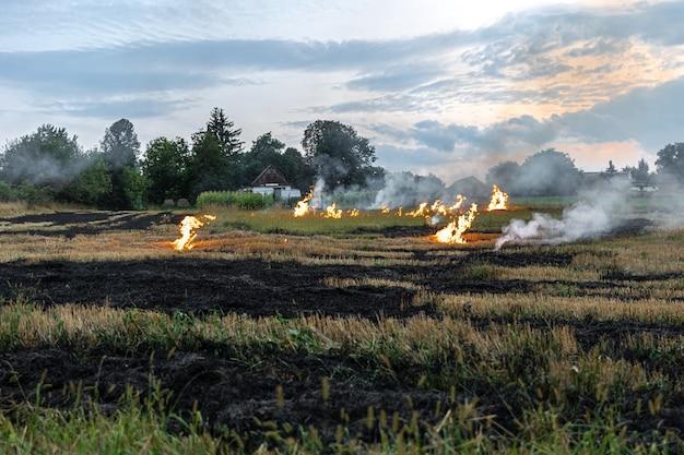 An einem heißen sommertag brennt trockenes gras auf dem feld. brennendes feld mit trockenem gras.