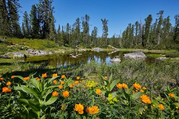 An einem klaren, sonnigen tag wachsen in der nähe des gebirgsbachs seltene bergpflanzen und -blumen. erstaunliche flora der berge, pflanzen, die im roten buch aufgeführt sind