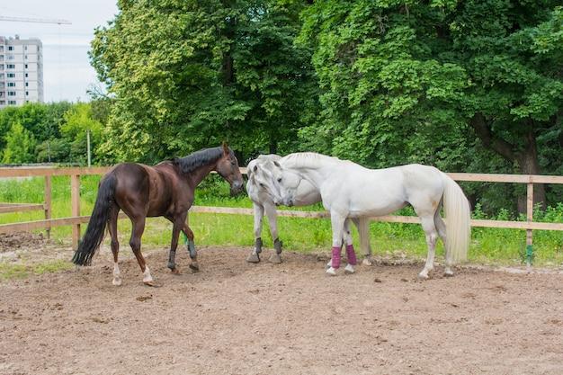 An einem sommertag grasen drei pferde und laufen im fahrerlager