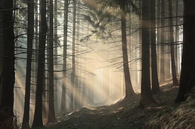 An einem sonnigen herbstmorgen durch den wald auf den gipfel des berges wandern