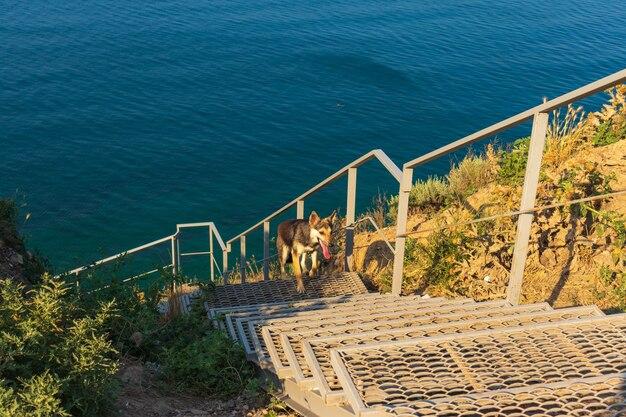 Anapa, russische föderation treppe zum meer
