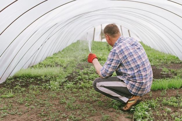 Anbau von gemüse im garten als hobby