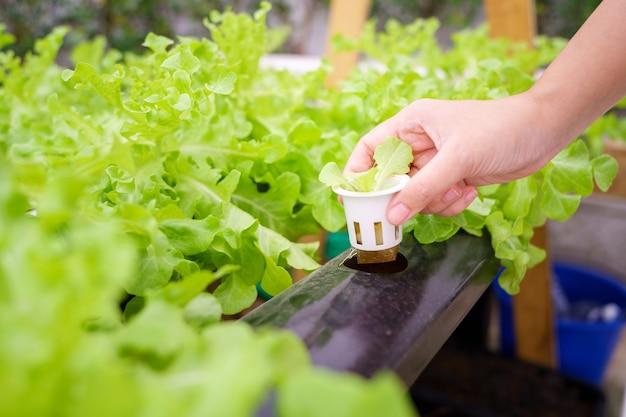 Anbau von gemüse ohne verwendung von erde oder bezeichnung eines anderen typs hydroponic vegetable growing