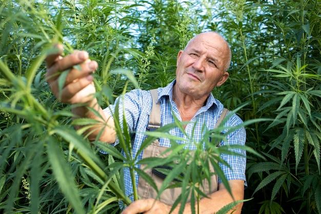 Anbau von pflanzen für alternative medizin und gesundheit.