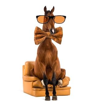 Andalusisches pferd sitzt auf einem sessel, trägt eine brille und eine fliege