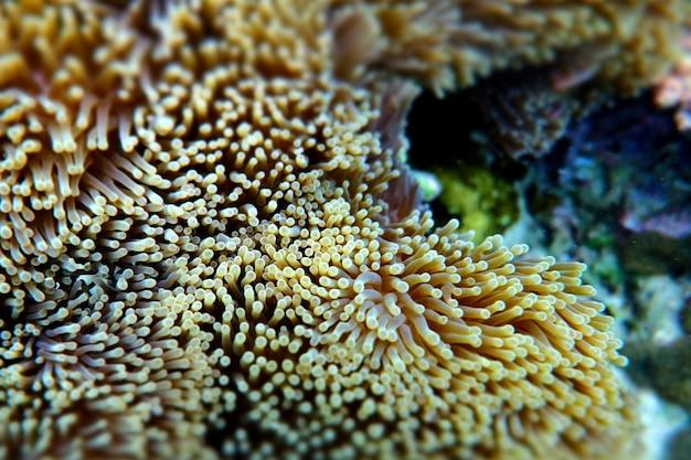Anemone unter dem meer in der cockburn-insel von myanmar