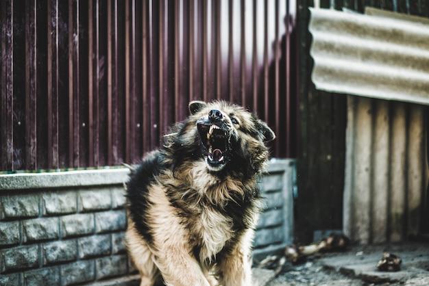 Angry hund