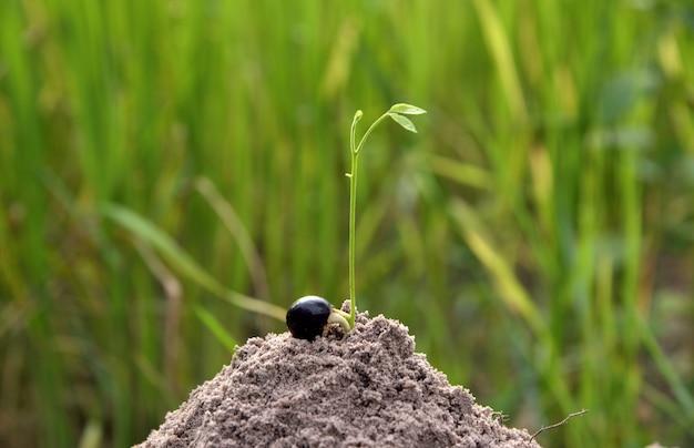 Anlage, die im boden auf wachsendem konzept der idee wächst