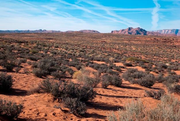 Anlagen in einer wüste, horseshoe bend, seite, arizona, usa