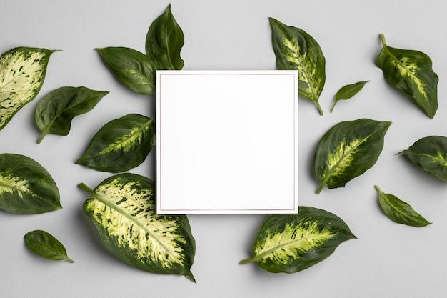 Anordnung der grünen blätter mit leerem rahmen