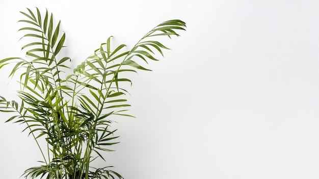 Anordnung der grünen pflanze mit kopierraum