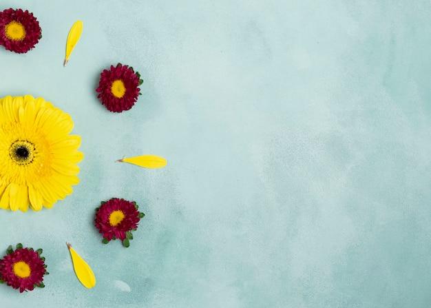 Anordnung für gänseblümchen und sonnenblume mit exemplarplatz