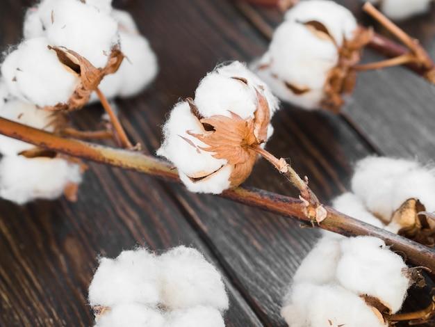 Anordnung mit baumwollblumen auf hölzernem hintergrund