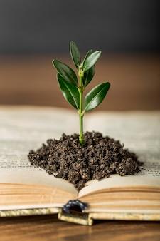 Anordnung mit buch und pflanze im boden