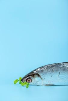 Anordnung mit fischen und blauem hintergrund
