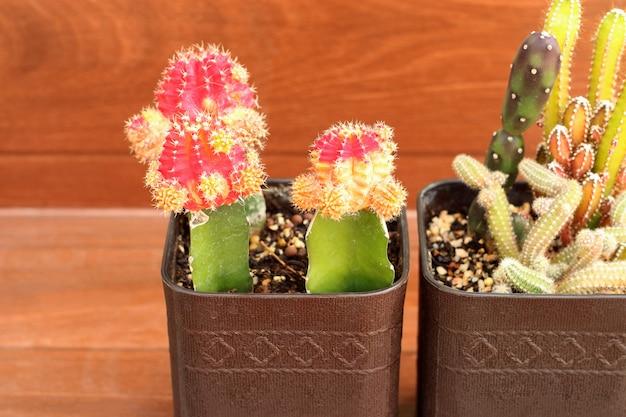 Ansammlung kleiner kaktus oder saftige anlagen mit exemplarplatz.