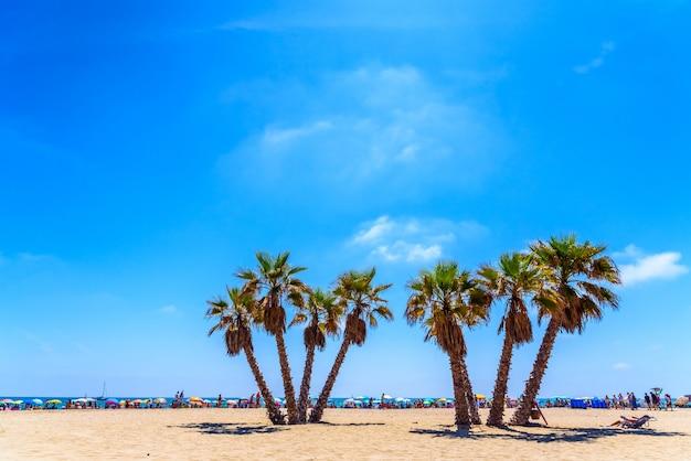 Ansammlung von urlaubern, die den sand eines mediterranen strandes nutzen, um ihre sonnenschirme zu platzieren und den sommer zu genießen.