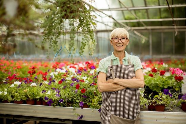 Ansicht an der schönen älteren frau, die mit frühlingsblumen im greengarden arbeitet