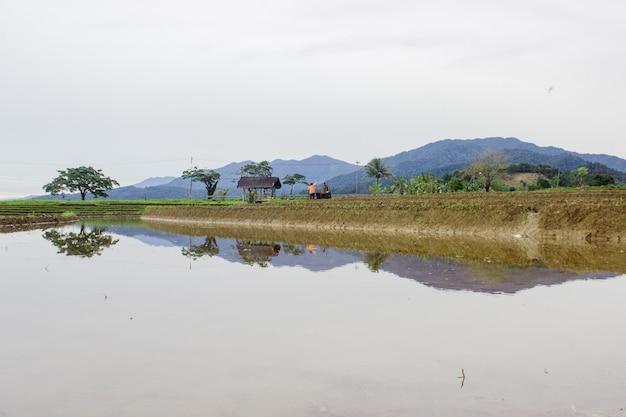 Ansicht der reflexionen auf reisfeldern mit klarem weißem himmel, wenn es während des tages in nord-bengkulu, indonesien regnet