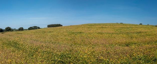 Ansicht der sojabohnenplantage an einem sonnigen tag in brasilien.