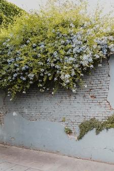 Ansicht der vegetation, die auf stadtstraßenmauer wächst