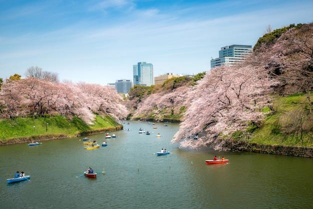 Ansicht des enormen kirschblütenbaums mit personenruder-kajakboot in tokyo, japan