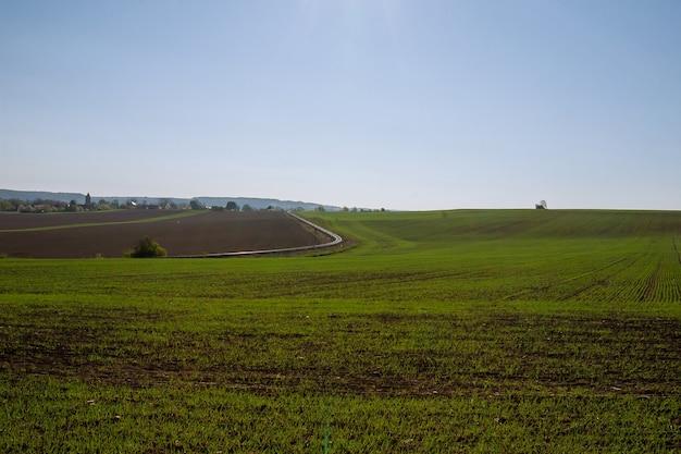 Ansicht des landwirtschaftlichen feldes mit trieben des winterweizens.