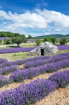 Ansicht des lavendelfeldes und des blauen himmels, frankreich