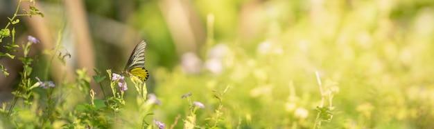 Ansicht des schönen goldenen vogelschwingenschmetterlings auf der unscharfen oberfläche der grünen natur im garten mit kopienraum
