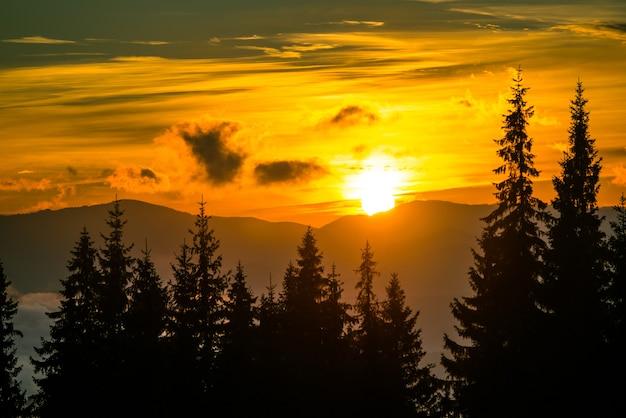 Ansicht des schönen hellen sonnenuntergangs in den bergen. schattenbilder von tannenbäumen mit dramatischem gelbem himmel auf hintergrund. konzept des abends im wald.