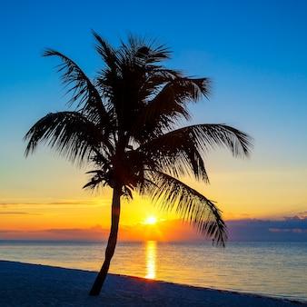 Ansicht des strandes mit palme bei sonnenuntergang, key west, usa