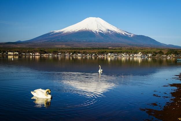 Ansicht des weißen schwans und des berges fuji am yamanaka see, yamanashi, japan