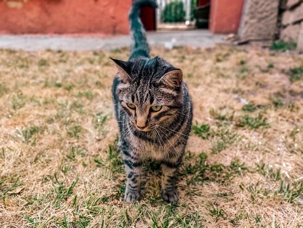 Ansicht einer neugierigen katze, die etwas interessantes in einem schönen garten sucht