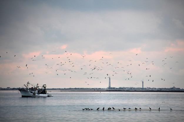 Ansicht eines kleinen fischerbootes gefolgt von vielen vögeln auf olhao, portugal.