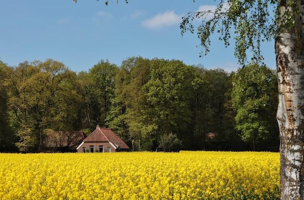 Ansicht eines schönen hauses in einem feld, das mit blumen und bäumen in den niederlanden bedeckt wird