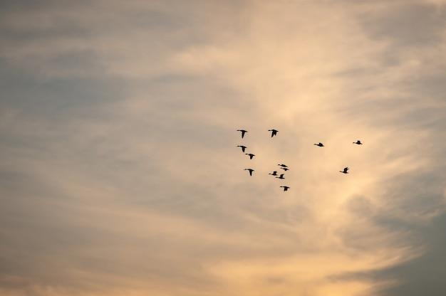 Ansicht eines vogelschwarms, der während des sonnenuntergangs in einen schönen himmel fliegt