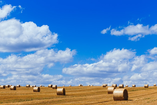 Ansicht eines weit geernteten feldes mit großen gelben strohballen unter dem blauen himmel