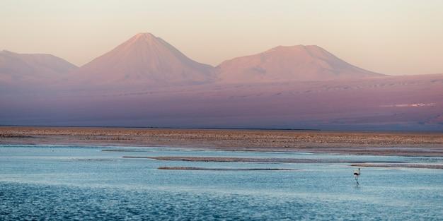 Ansicht von chaxa-lagune, los-flamenco-nationales reserve, san pedro de atacama, el loa-provinz, antofag