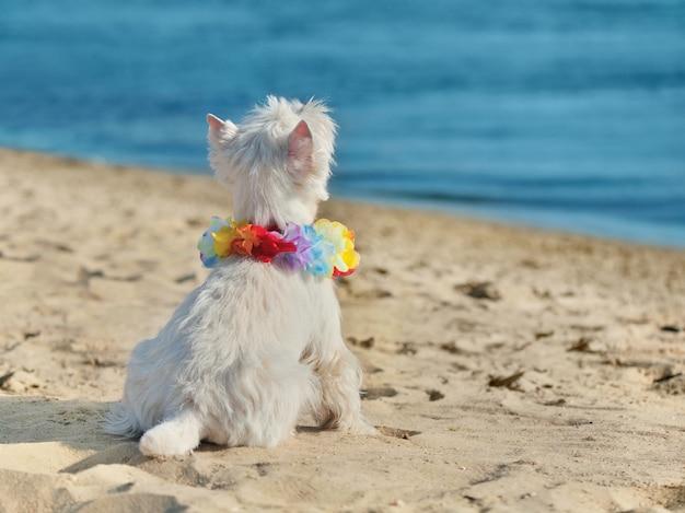 Ansicht von der rückseite des hundes am strand, der oben zum himmel schaut