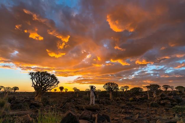 Ansicht von köcher-baum-wald mit schöner himmel-sonnenuntergang-dämmerungshimmelszene in keetmanshoop, namibia