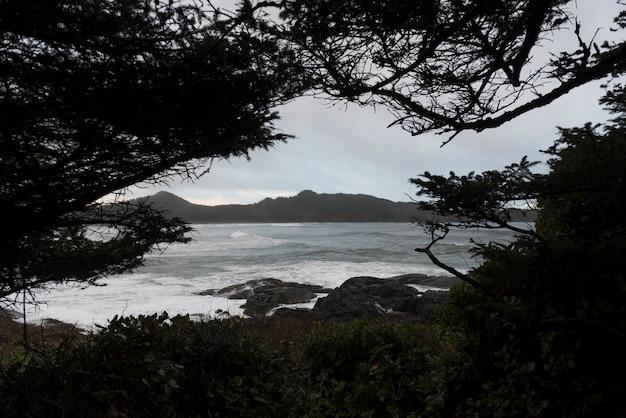 Ansicht von meer durch baumast, pettinger-punkt, cox-bucht, pazifische rand-nationalpark-reserve, tofino